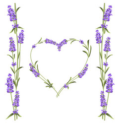 The lavender elegant card with frame of flowers vector
