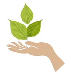 Green leaf with hand vector image vector image