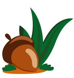 acorn nut vector image