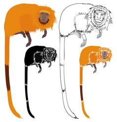 Golden lion tamarin front view vector