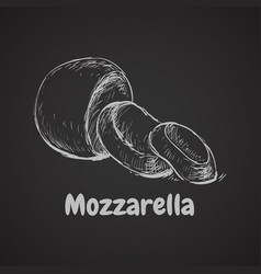 mozzarella hand drawn vector image