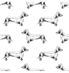 seamless pattern with hand drawn dachshunds vector image