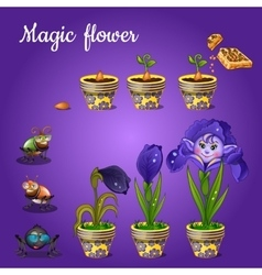 Stages of growing magic blue flower vector image