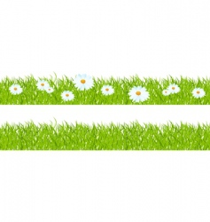 grass and chamomiles vector image