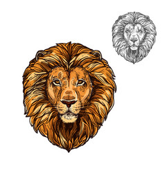 lion muzzle african wild animal sketch icon vector image vector image