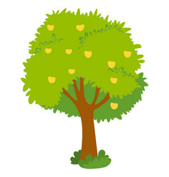 Apple tree with yellow fruits green crown isolated vector