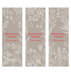 Banners with hand drawn medicinal herbs and plants vector