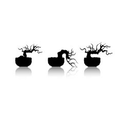bonsai tree japanese and chinese trees vector image