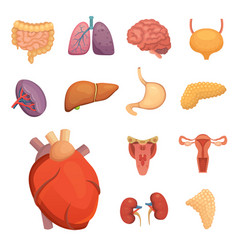 cartoon human organs set anatomy of body vector image