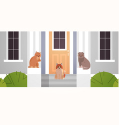 Cats group sitting on porch in entrance house vector