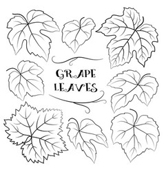 Grapes leaves black pictograms vector