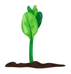 Grow soybean plant icon cartoon style vector