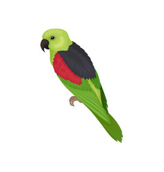 Lory parrot with bright feathers australian bird vector