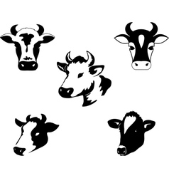 set of icons with cow vector image vector image