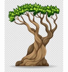 big tree on transparent background vector image