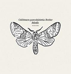 Calliteara pseudabietis butler is a moth the vector