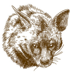 Engraving of hyena head vector