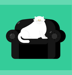 fat white cat on soft armchair thick big pet on vector image
