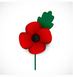 Poppy and flower vector