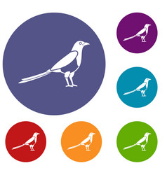 Bird magpie icons set vector
