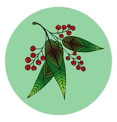 Hand drawn of beautiful rowan berry vector image