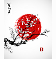 Sakura in blossom and red sun symbol of japan on vector