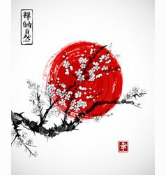 sakura in blossom and red sun symbol of japan vector image