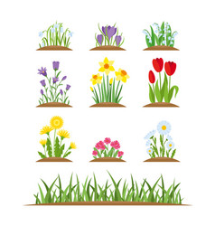 spring wild forest and garden flowers vector image