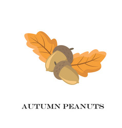 autumn peanuts on white background vector image vector image