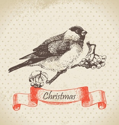 Christmas bullfinch and ashberry vector image
