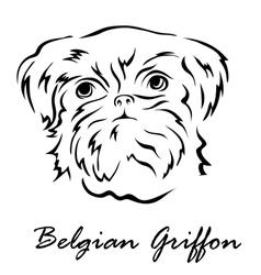 Belgian Griffon vector