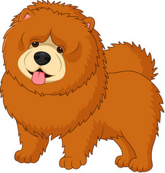 Chow chow dog breed vector