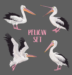 pelican birds set animals in the wild seabirds vector image