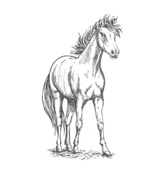 Racehorse stallion sketch for equine sport design vector image