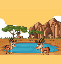 Savanna field with many gazelles vector
