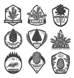 Vintage monochrome conifers labels set vector