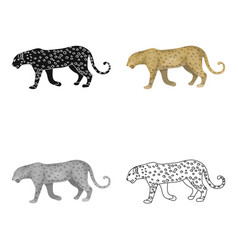 leopardafrican safari single icon in cartoon vector image vector image