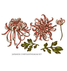collection hand drawn colored japanese vector image