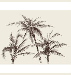 Palm trees foliage tree crown drawing vector