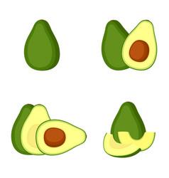 avocado whole fruit slice vector image