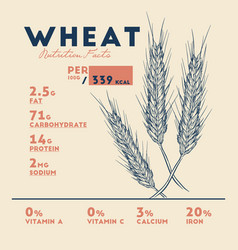 health benefits of wheat nutrition facts vector image