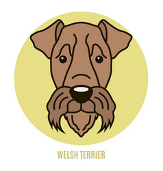 portrait of welsh terrier vector image