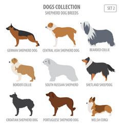 shepherd dog breeds sheepdogs collection isolated vector image