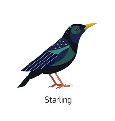 starling isolated on white background small vector image