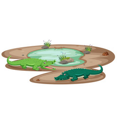 crocodile at the pond vector image