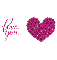 Heart pink phlox flowers isolated on white vector