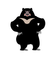 himalayan bear angry emotion aggressive wild vector image