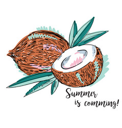 Pair of coconuts vector