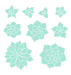 teal succulent plant set on white background vector image