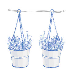 lavender in pots on white vector image vector image